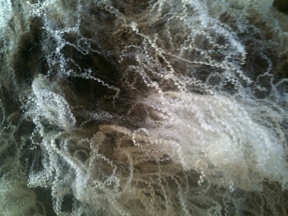 Closeup of wool